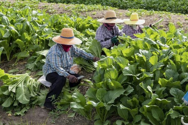 Honduras: COHEP se pronuncia sobre feriado del Día del Trabajador
