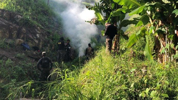 incineran plantas de marihuana en Colón