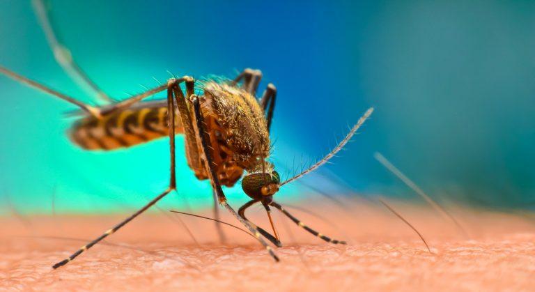 OMS: Honduras, entre los países que podrían eliminar la malaria para 2025