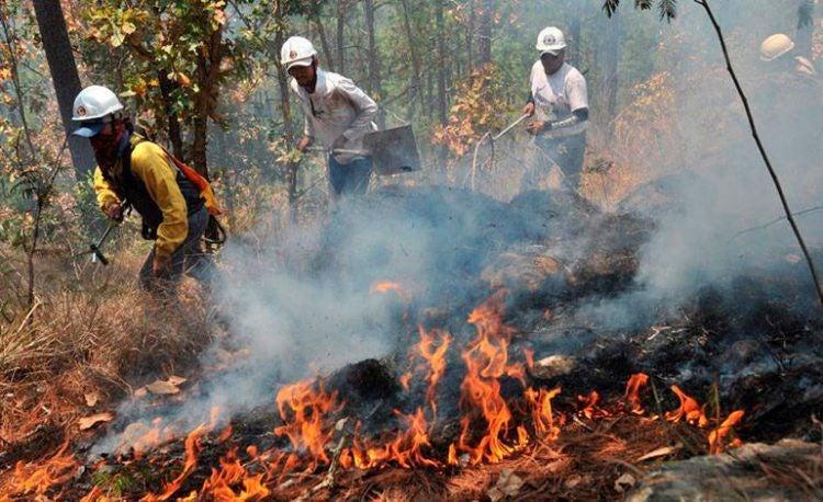 Incendios forestales disminuyen en un 70 %; Distrito Central es el que más registra