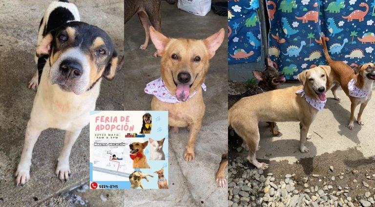"""""""No cobramos, solo cuide la mascota"""": Refugio Amor y Abrigo realiza feria de adopción"""