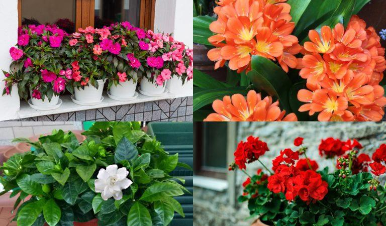 DE MUJERES| Diez plantitas y flores para regalarle a las madres en su día