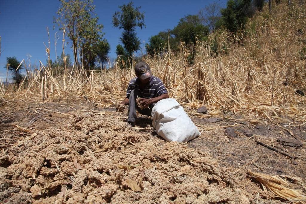 escasez de alimentos hondureños