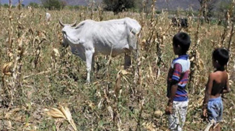 GNAFC: Escasez de alimentos afecta a 2.9 millones de hondureños
