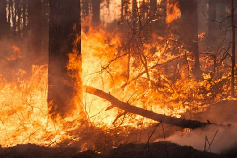 Honduras: incendios forestales han disminuido en un 70 % en 2021