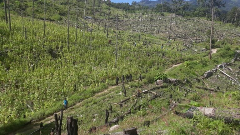 Más de 60 mil hectáreas de bosques perdería Honduras cada año