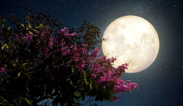 luna de sangre y super luna de las flores