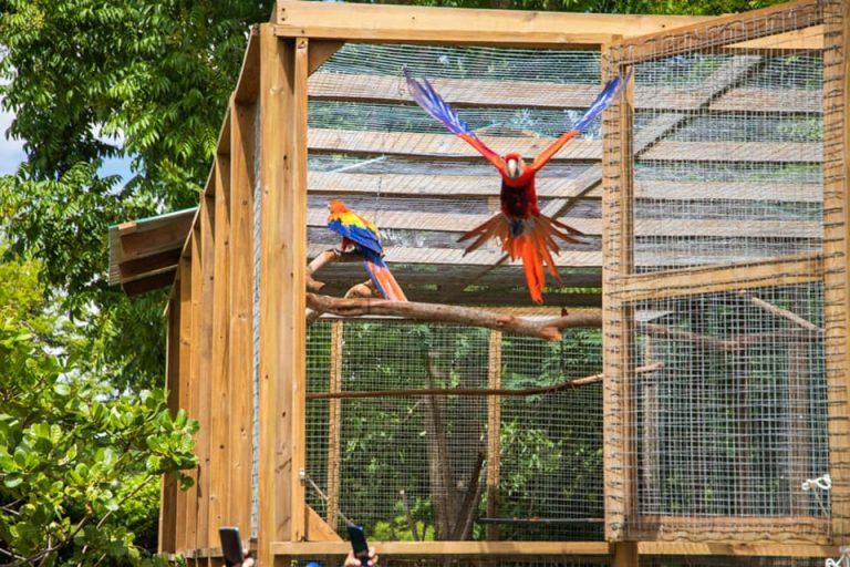 ¡Ambiente festivo! Liberan seis guacamayas en Copán Ruinas