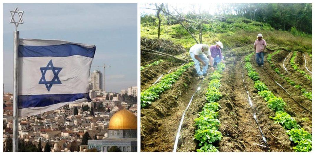 Escuelas agrícolas Israel Honduras
