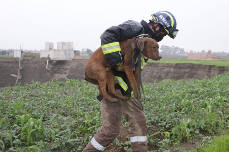 ¡Lo lograron! Rescatan a dos perritos que cayeron al enorme socavón en México