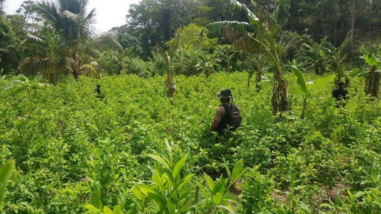 Autoridades reportan descubrimiento de supuesta coca y «narcolabortario» en Colón