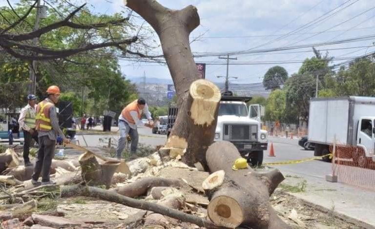 Denuncian corte masivo de árboles en la capital; AMDC dice que serán replantados