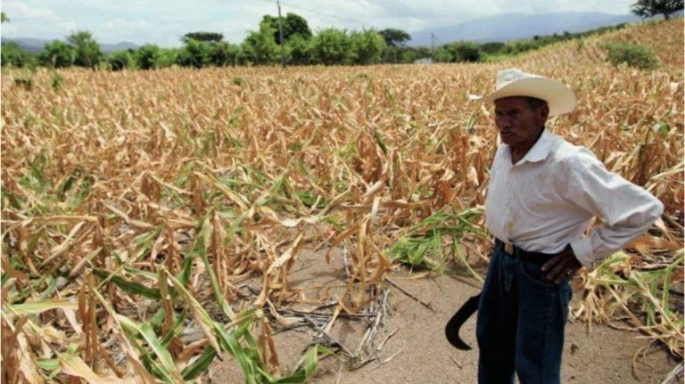 A finales de junio inicia periodo seco en Honduras; Cenaos dice cuánto durará