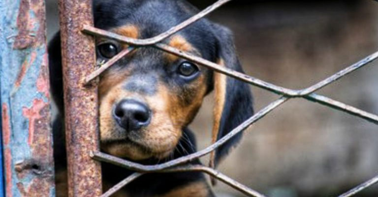 Por un año, hondureños no podrán viajar con perros a Estados Unidos