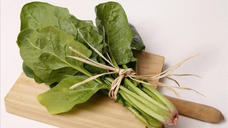 SALUD| Consumir espinaca ayuda a fortalecer el sistema inmune