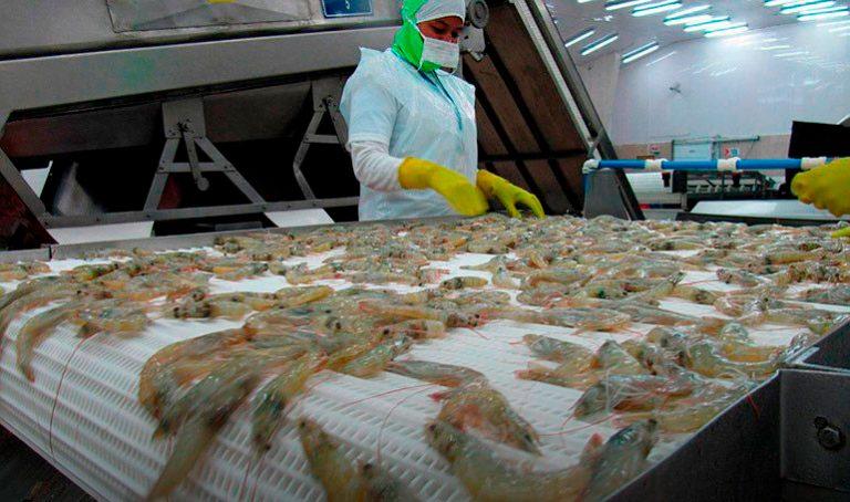 Aprueban reformas para fortalecer procesos productivos de camarón