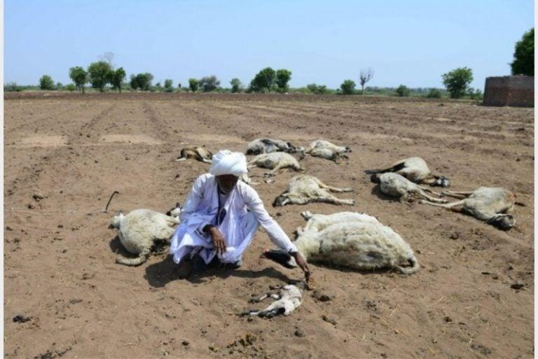 Olas de calor causadas por el cambio climático dejan más de 100 mil muertes al año