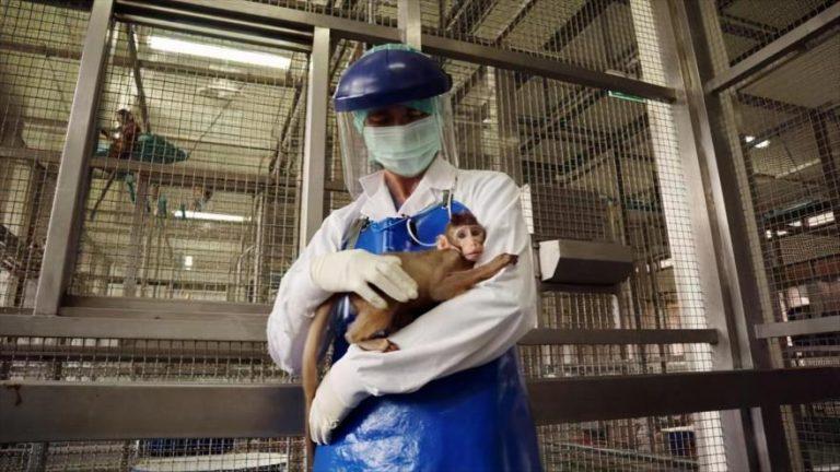 «Herpes B»: Muere veterinario por un raro y mortal virus encontrado en monos
