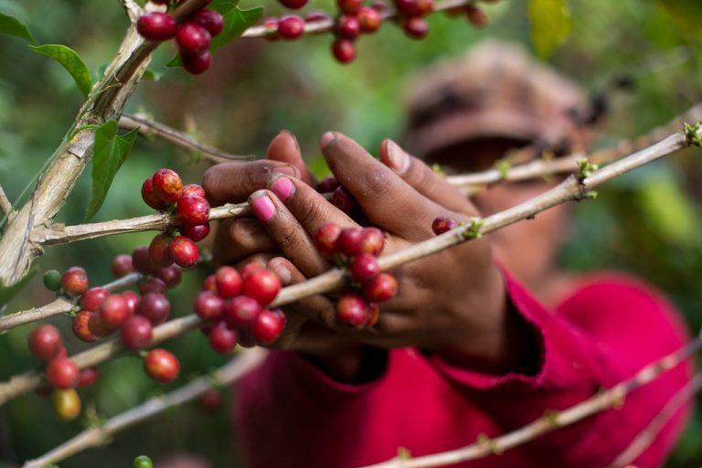 Presidente del CHE: Economía de Honduras crecerá un 3 % en 2021