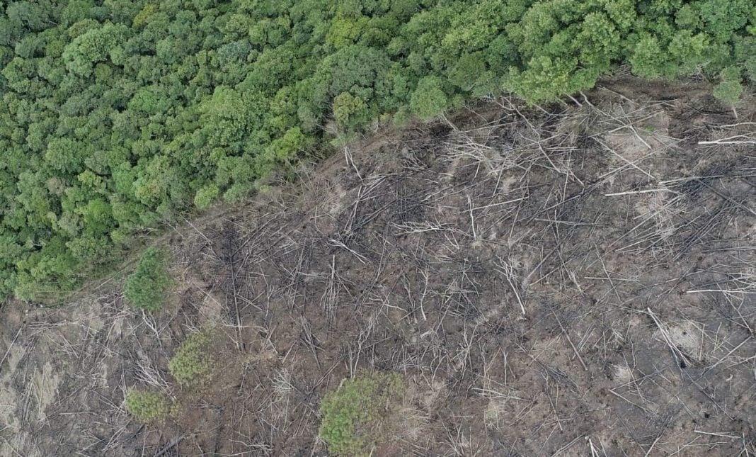 Montaña Camapara tala de bosque