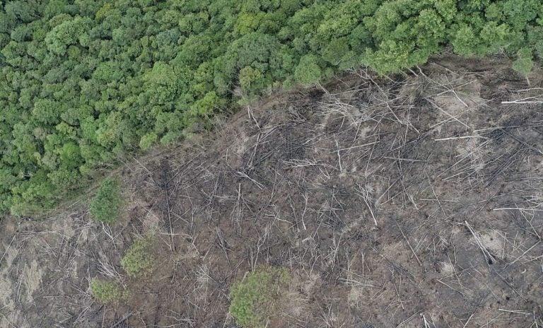 Lempira| Montaña Camapara, un abastecedor de agua amenazado por la tala y quema