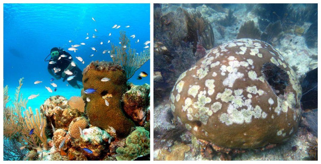 Arrecifes en Roatán enfermedad