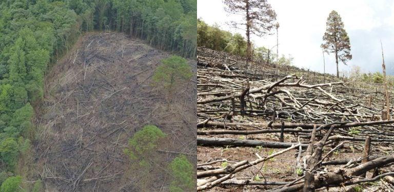 Destrucción en Camapara dejaría consecuencias severas: sequías, muertes y contaminación