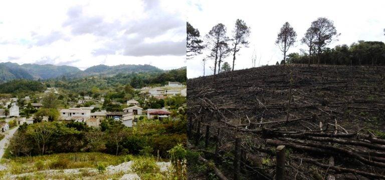 Lempira: por tala ilegal en Camapara, más de 20,000 personas quedarían sin agua