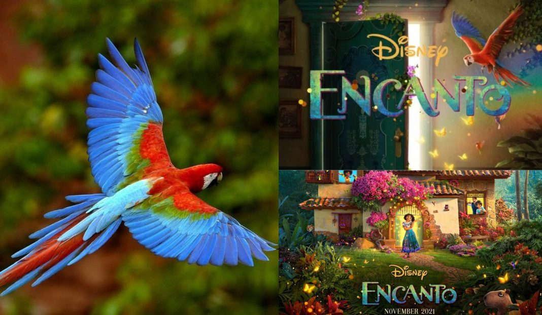 Guara Roja película Disney
