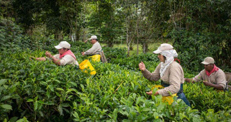 Reorientan L500 millones del sector agrícola al transporte