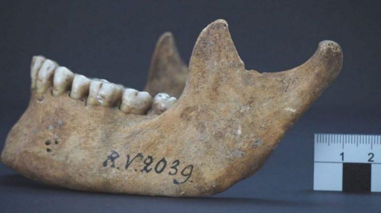 """Peste negra, hace más de 5 mil años: descubren nuevo """"paciente cero"""""""