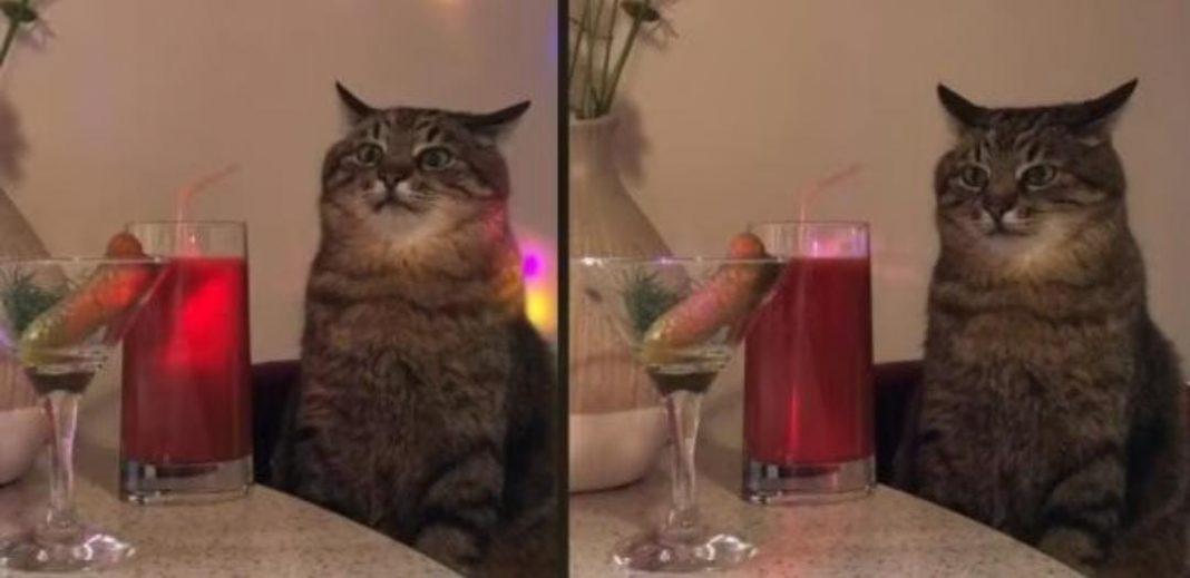 gato fiestero viral TikTok