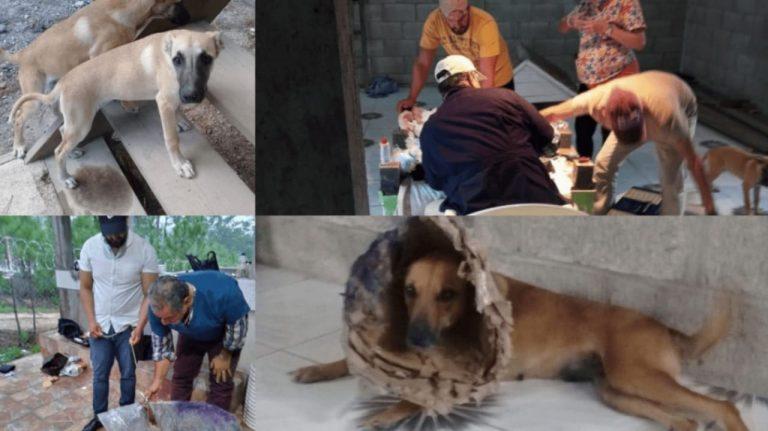 Hondureña en EEUU crea albergue para perros callejeros de Santa Ana, FM