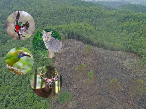 vida silvestre Montaña Camapara
