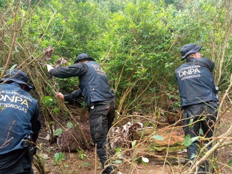 Colón: hallan más de 20 mil arbustos de supuesta coca y un «narcolaboratorio»