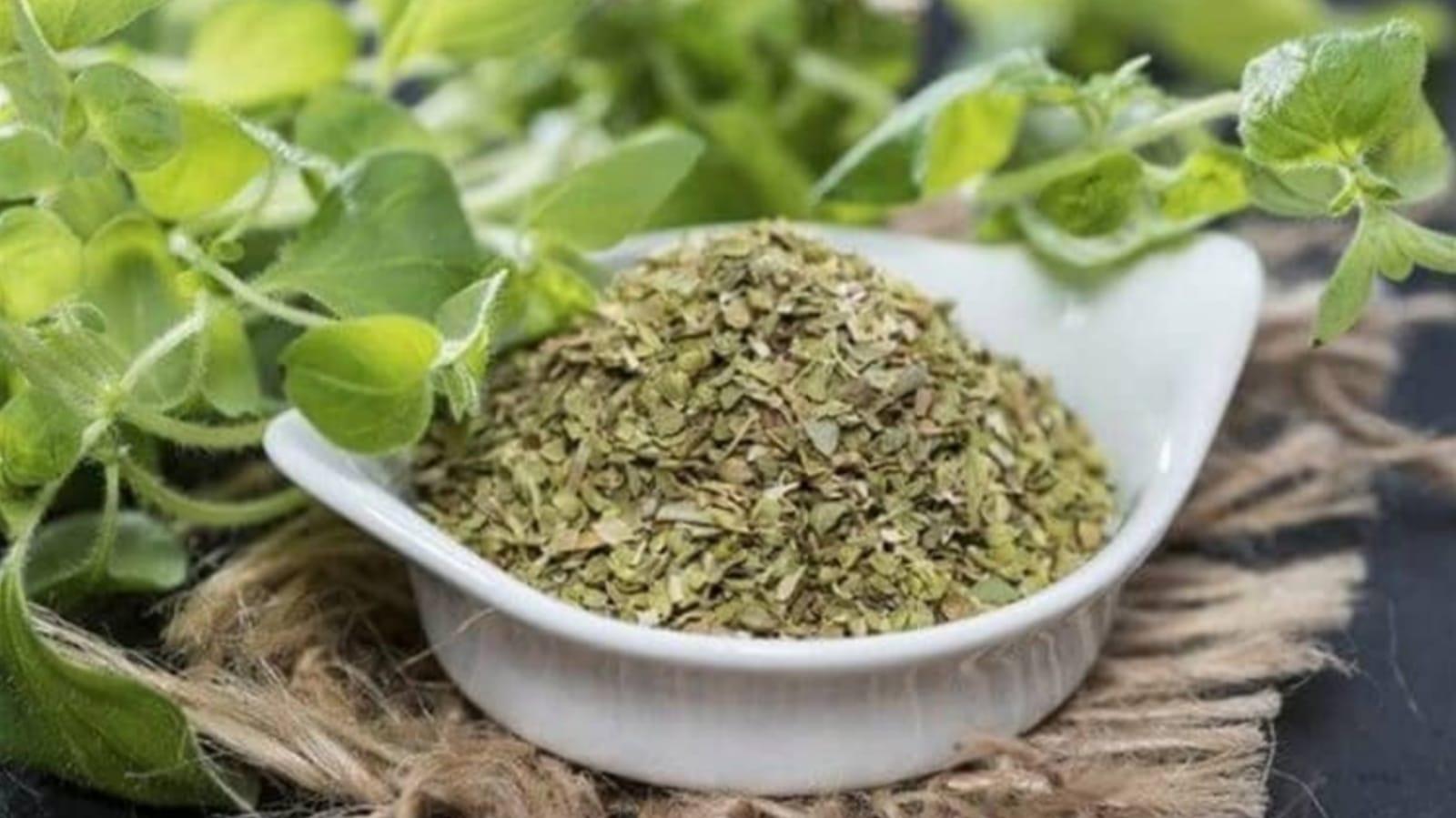 beneficios y propiedades del té de orégano