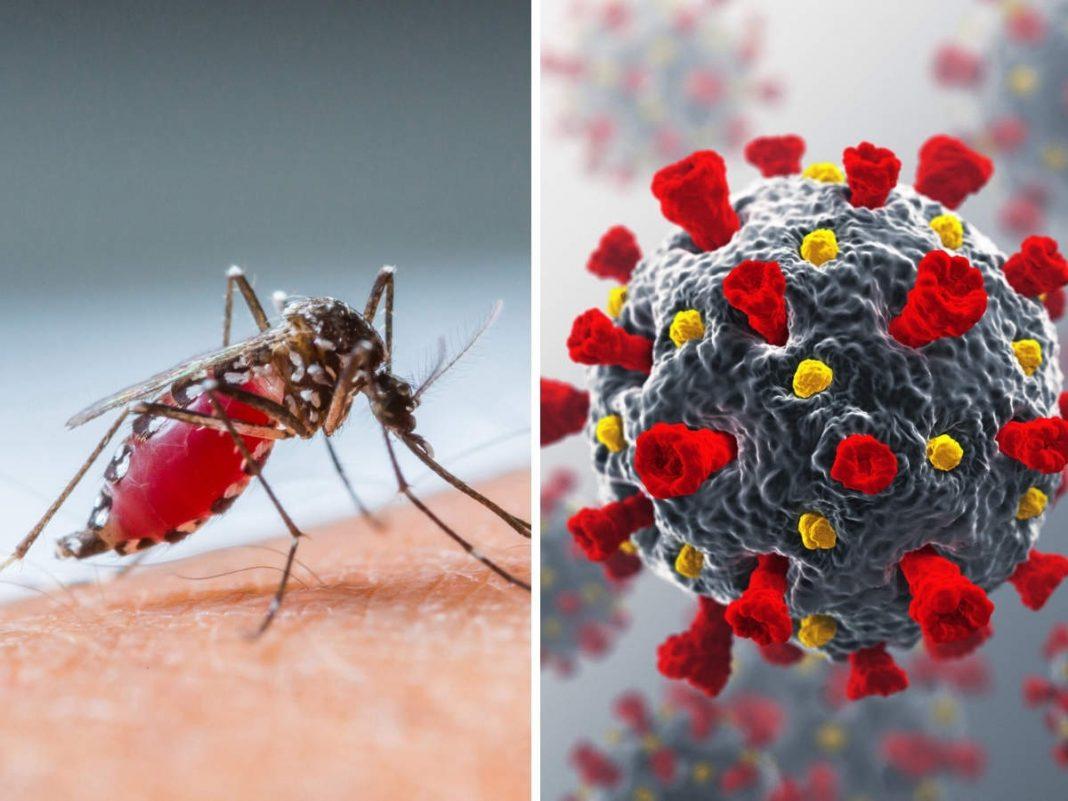casos de COVID-19 con dengue