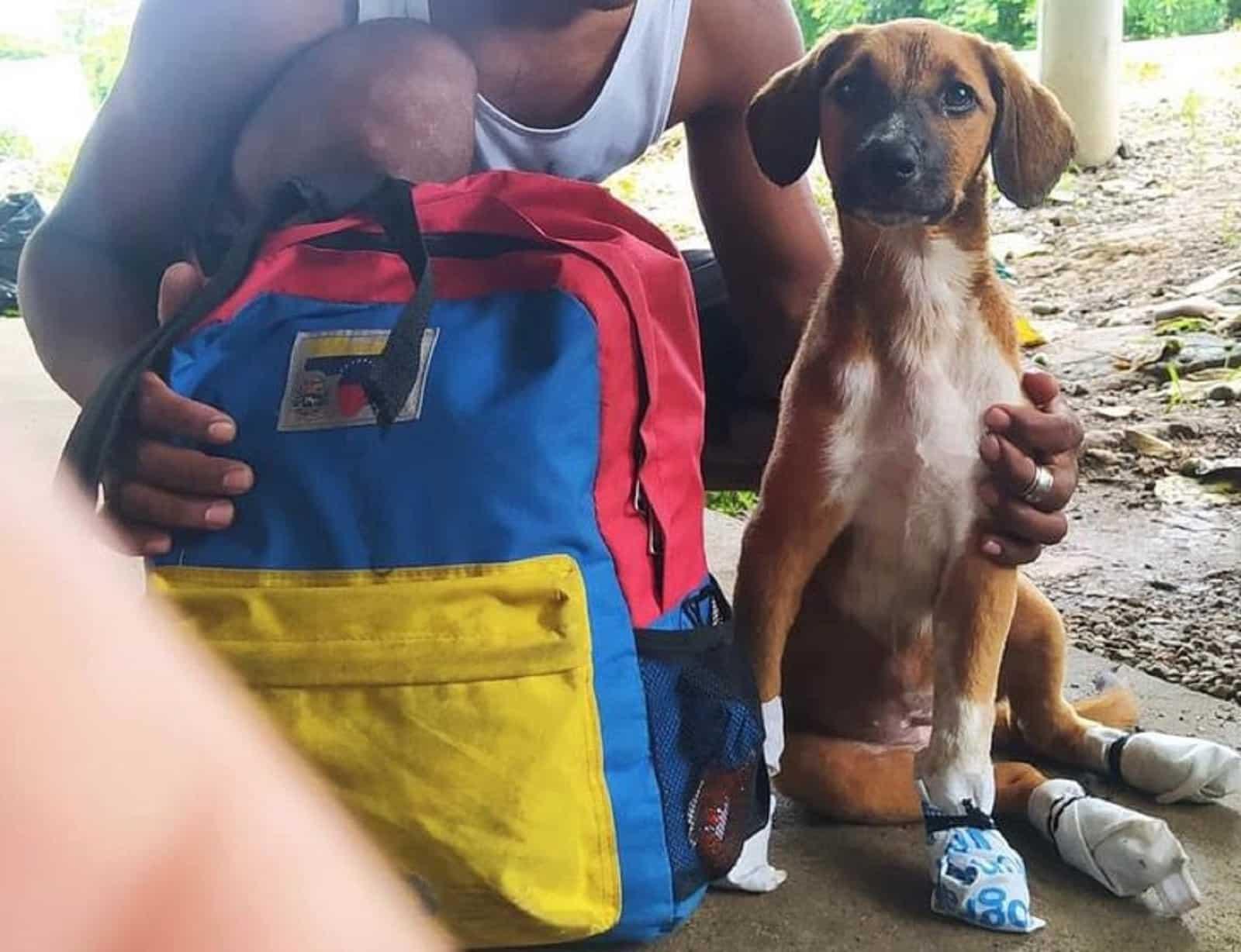joven caminó con perrita a venezuela