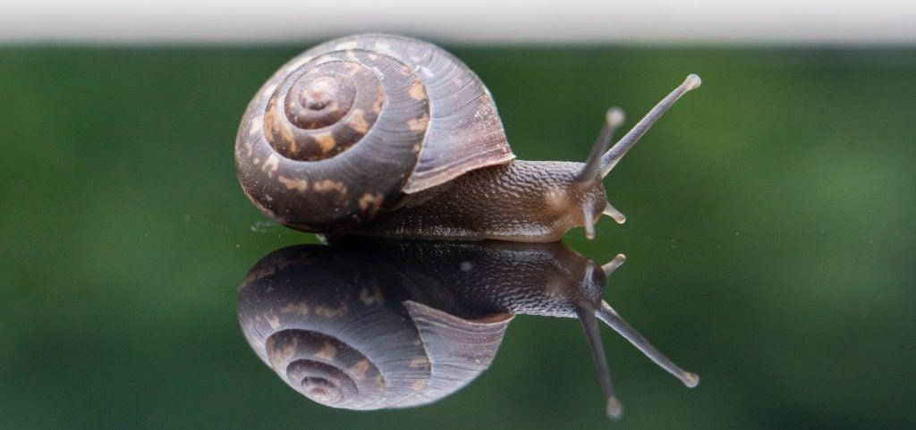 Beneficios de la baba de caracol