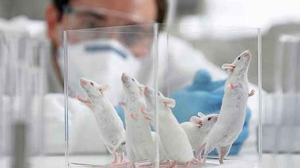 eliminan cáncer en ratones y perros.