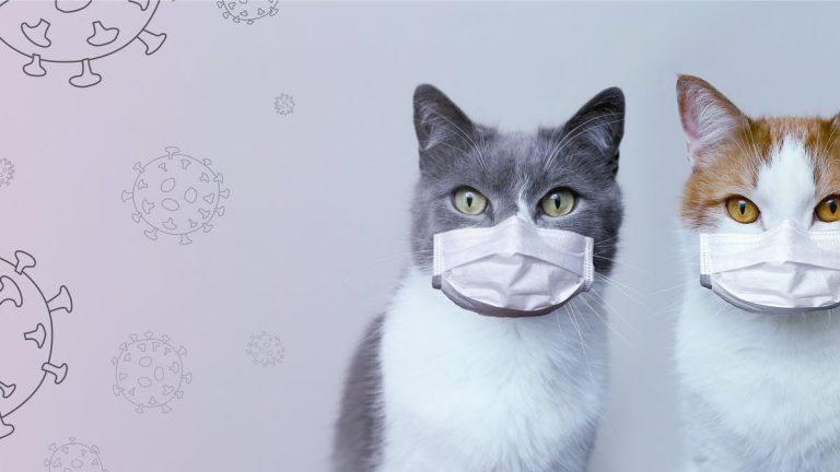 Cifras del coronavirus | Los gatos tienen anticuerpos