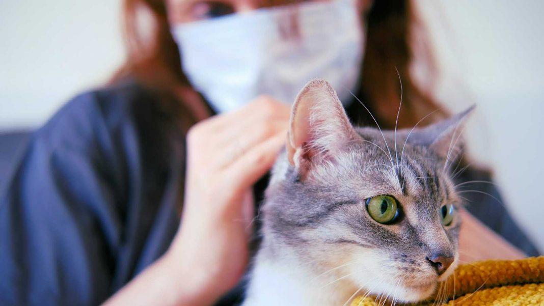 Animales vulnerables al COVID