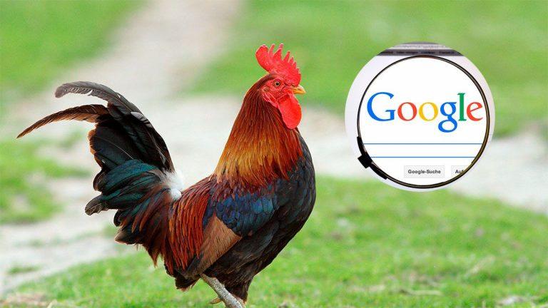 Pronunciación de gallo en traductor Google genera risas y memes