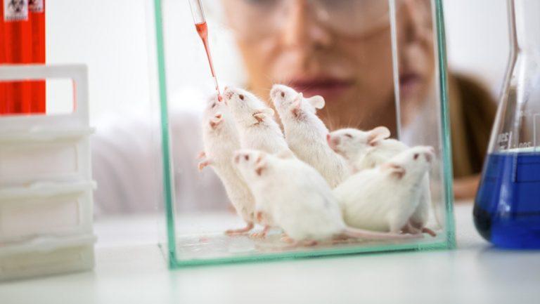 Científicos desarrollan postales de esperma de ratón liofilizado