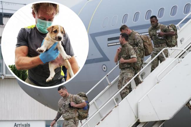 Exmarine británico salva de Afganistán a más 170 perros y gatos