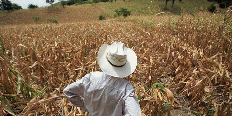 """""""BANHPROVI es una realidad, el financiamiento del agro aumentó significativamente este año"""", aseguró Guzmán."""