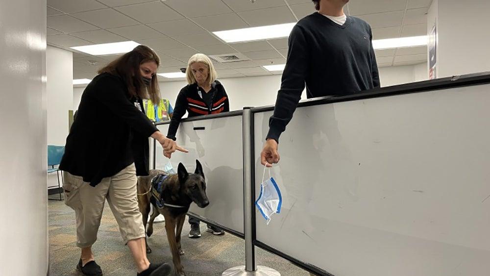 Perro olfateando mascarillas de empleados del aeropuerto.