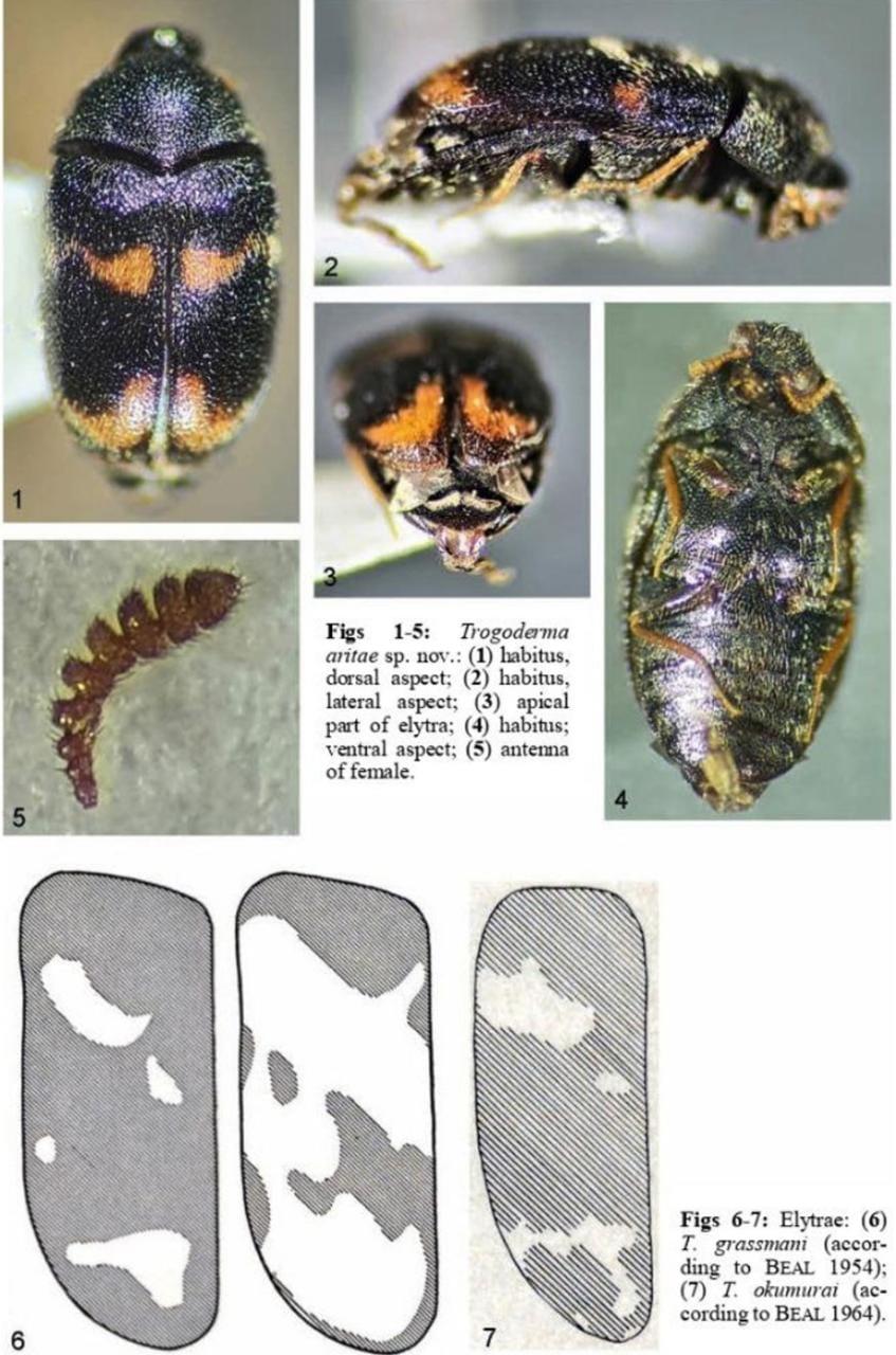 nueva especie de insecto en La Paz