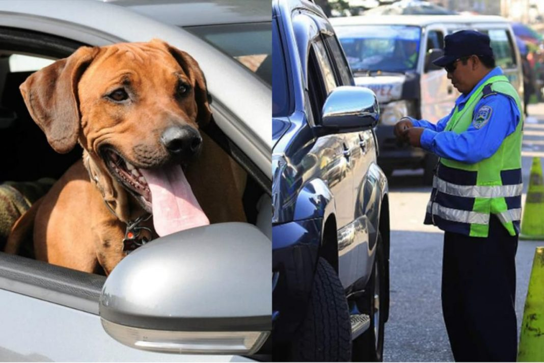 Multa perro en carro