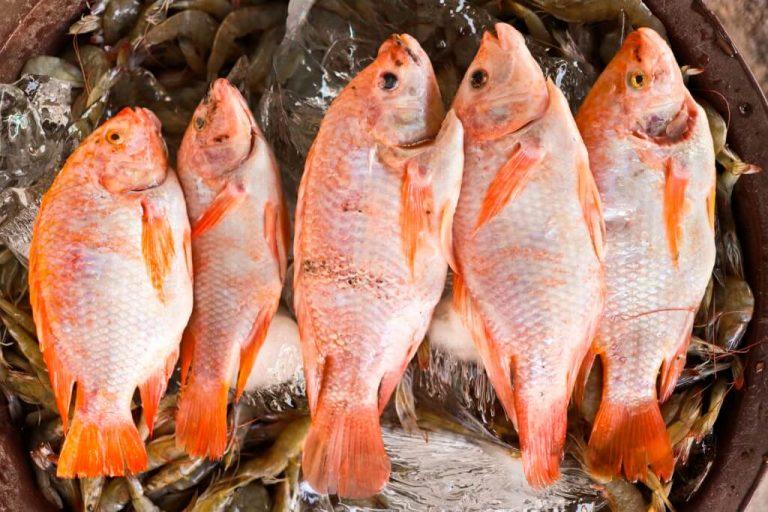 Por contaminación en Río Motagua, hay escasez de pez rojo
